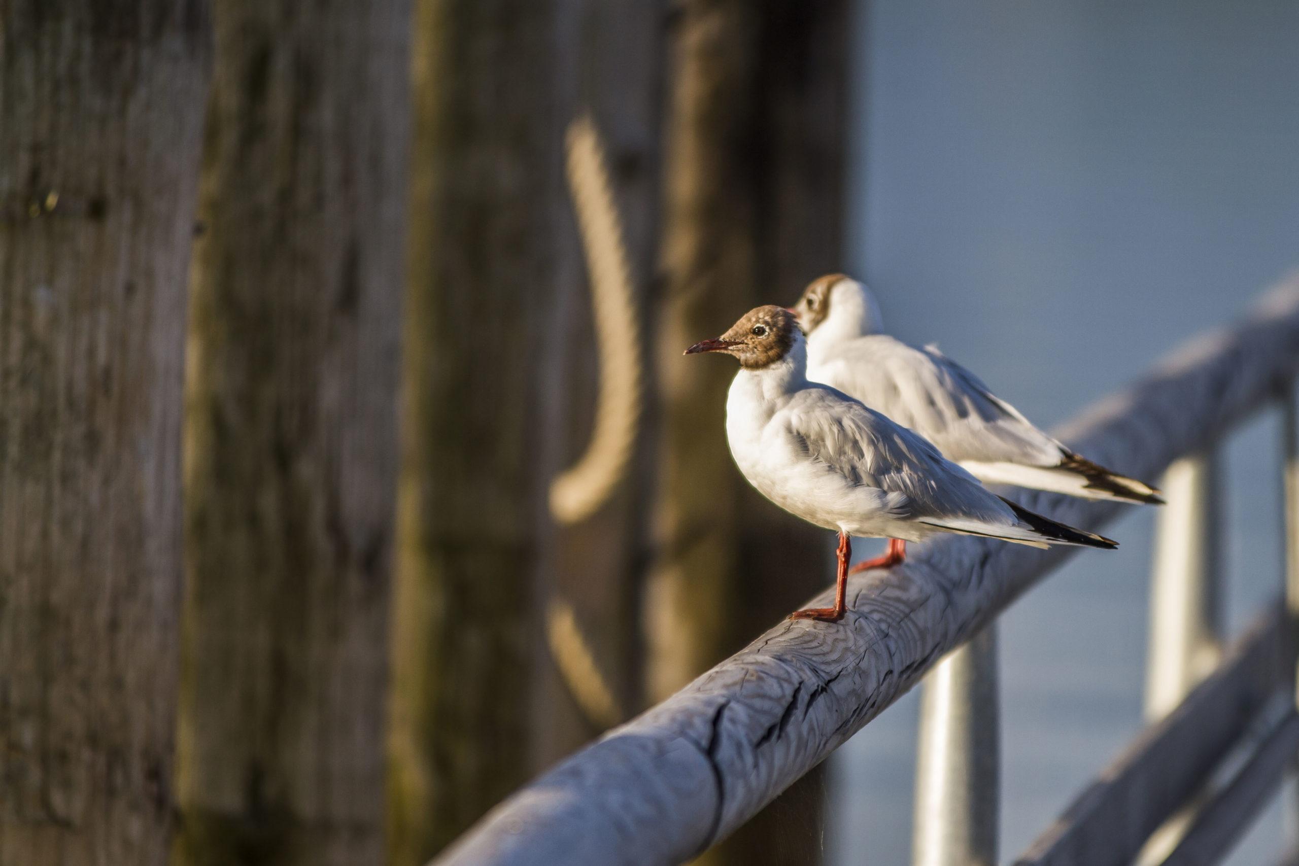 Naturfotografie im Chiemgau